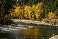 matericlook.com YellowByTheRiver British Columbia, view #art #photography #river #landscape #canada #yellow #warm #matericlook