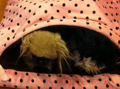 Pet Snuggle Sack Pillow Bed 24 X 28 All Faux Fur by FortunesPet, $39.99