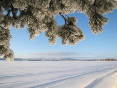 Winter day in Sotkamo, Finland. Bucket List Destinations, Winter Day, Beautiful Landscapes, Winter Wonderland, Beautiful Pictures, Places To Visit, Explore, Future, Country