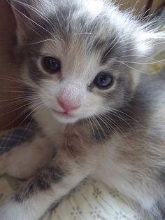 Growing Kitten, via Flickr.