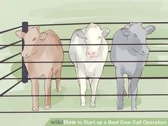 Image titled Start up a Beef Cow Calf Operation Step 10