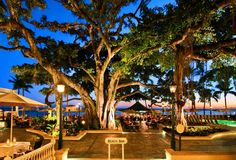 The 15 Most Important Bars in Honolulu