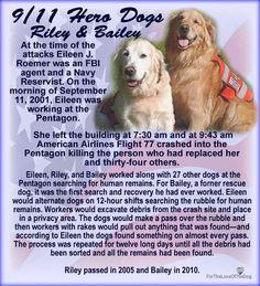 Riley & Bailey 9/11 Dog Heroes