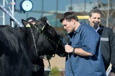 Golic, Stink & Vanessa The Cow Espn, Cow, Animals, Animales, Animaux, Cattle, Animal, Animais