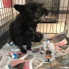 Animal Shelter, Animal Rescue, Morton Grove, Cat Ages, Shetland Sheepdog, Baby Puppies, Make A Donation, Beagle, Pet Adoption