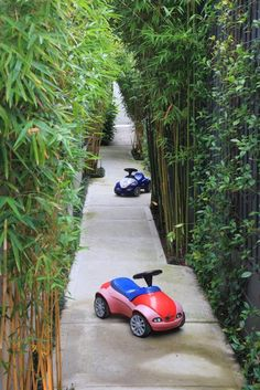 Erskineville project - narrow space=vertical planting (cute piccie too!)