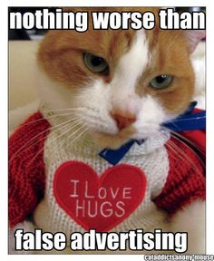 .such a sweet kitty, wish my kitty liked hugs:)