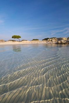 Fine white sand and shallow translucent waters in Halkidiki, Greece