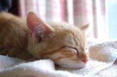 【ネコ】ニャッハー! 日本が開発したハイテク「ネコ耳」に海外のネコウヨどもが狂喜乱舞だぜー! - 2ちゃんねるキャッシュ