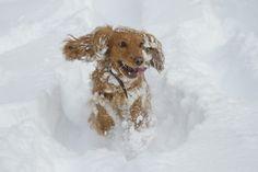 Ben je al aan het genieten van de sneeuw? Een winterwandeling of sneeuwpret met je dier of de kinderen? Maak een leuke sneeuwfoto en stuur jouw sneeuwfoto met je naam naar y.kaats.de.swart@liemerskunstwerk.nl. De mooiste foto's komen op onze facebooksite. Tips over fotograferen? Wij hebben de boeken!