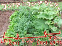 Herbs, Vegetables, Flowers, Gardening, Kitchen, Life, Style, Swag, Cuisine