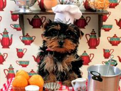 the cutest cook!
