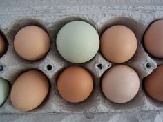Don't wash your eggs! It allows bacteria to enter...what you can do..