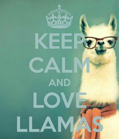 KEEP CALM AND LOVE LLAMAS. Another original poster design created with the Keep Calm-o-matic. Buy this design or create your own original Keep Calm design now. Alpacas, Animals And Pets, Baby Animals, Funny Animals, Cute Animals, Funny Llama, Cute Llama, Cartoon Llama, Llama Pictures