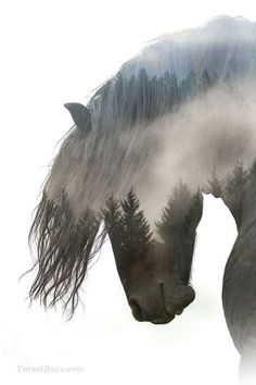 Double exposed image of horse | 12 of the Most Artistic Horse Photographs