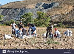 People picking patatos in the fields, in Akhaltsikhe, Georgia Stock Photo, Royalty Free Image: 144147084 - Alamy Japanese Farmer, Royalty Free Images, Mount Rushmore, Fields, Georgia, Potatoes, Stock Photos, Mountains, Illustration