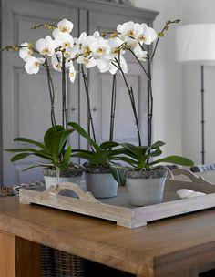 #orchids #Deco #Interior #Plants
