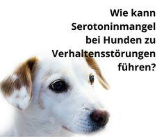 Wie kann #Serotoninmangel bei Hunden zu Verhaltensstörungen führen? #Glückshormon #L-Tryptophan