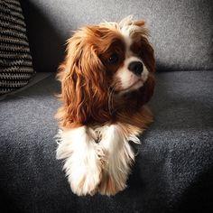 Hair cut for Ginger