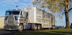 Semi Trucks, Big Trucks, Freightliner Trucks, Mafia, Cattle, Rigs, Trailers, Cow, Heaven