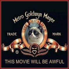 Grumpy Cat the movie