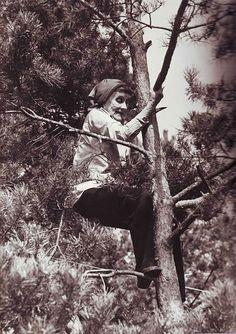 Astrid Lindgren climbing a pine tree.