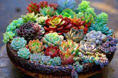 300pcs/bag mixed lithops seeds rare succulent seeds Living Stone bonsai mini garden plant by HappygardeningStudio on Etsy www.etsy.com/...