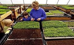 How to start a microgreen business