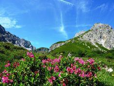 Das Fellhorn gilt als der Blumenberg der Allgäuer Alpen und ist für seine großen Alpenrosenfelder berühmt,