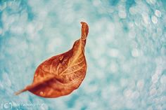 The Magic Whispers of Autumn Fall Captured by Alex Greenshpun