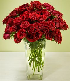 red spray roses - Google Search