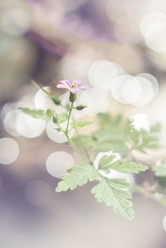 Geranium sylvaticum | Explore Valentina_Y's photos on Flickr… | Flickr - Photo Sharing!(I may be little..i may be small but if you have seen me ..thats enough)
