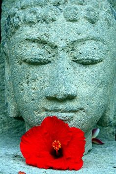 """""""May all that have life be delivered from suffering""""  ― Gautama Buddha"""