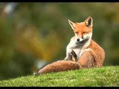 Image result for british wildlife photography awards