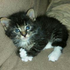 Baby Kipling.....4 weeks old