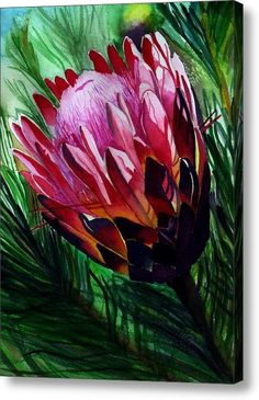 Protea print tropical flower pink hot pink red by kauaiartist Protea Art, Protea Flower, Rare Flowers, Beautiful Flowers, Tropical Flowers, Hawaiian Flowers, Watercolor Flowers, Watercolour, Flowering Trees