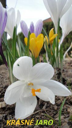 krásné jaro