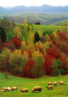 ~* Autumn in Romania ~*.stunning scenery, a beautiful photo:) Beautiful World, Beautiful Places, Beautiful Pictures, Beautiful Beautiful, Europa Tour, Autumn Scenery, Beautiful Landscapes, Wonders Of The World, Mother Nature
