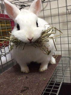 derpy bunny 04