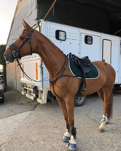 Cute Horses, Pretty Horses, Horse Love, Beautiful Horses, Show Jumping Horses, Show Horses, Strongest Animal, Horse Riding Clothes, Barrel Horse