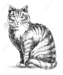 Image result for cat drawings black and white