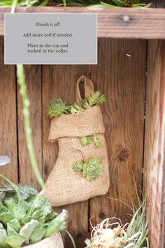 How to Plant a Christmas Stocking. All the easy steps are on our blog.