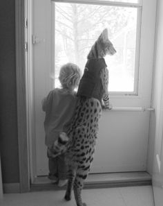 Serval. Me and Tom are gonna get one when we have our own home
