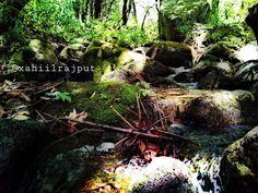 Pahari Roots: Khabru Waterfall - unexplored Beautiful Trek