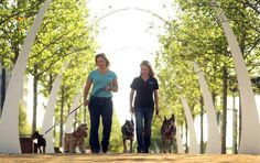Casandra Lambert and Marne Pringle of Fideo's Finest Dog Training take four pooches through their paces at Klyde Warren Park, where Fido's Finest will offer classes.