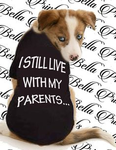 Funny Dogs, Cute Dogs, Happy Paw, Dog Mom Gifts, Pet Life, Dog Sweaters, Cartoon Dog, Animal Crafts, Animal Quotes