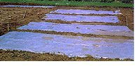 SOIL SOLARIZATION - KILL & PREVENT WEEDS. Doesn't always have to be done during the hottest time of the year.