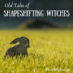 The concept of shapeshifting is an ancient one. Witches in Britain and the U. have been shapeshifting for centuries. Magick, Witchcraft, Witch Apps, Werewolf Stories, History Of Wine, Pagan Gods, Hedge Witch, Baby Witch, Amai