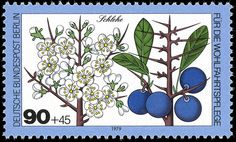 Art - Stamp Art - German - Fruit - Blueberry German Stamps, Berlin, Postage Stamp Art, Love Stamps, Flower Stamp, Vintage Stamps, Small Art, Fauna, Stamp Collecting