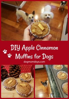 A super simple recipe for DIY apple cinnamon muffins for dogs. These muffins are a tasty, healthy treat for any day of the year! Dog Cookie Recipes, Easy Dog Treat Recipes, Apple Recipes, Dog Food Recipes, Soft Dog Treats, Homemade Dog Treats, Doggie Treats, Dog Snacks, Dog Muffin Recipe